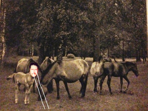 Pony no352